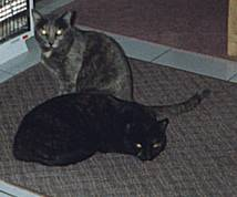 Picture of Bibs and Smokey
